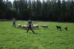 Lammaspaimenet